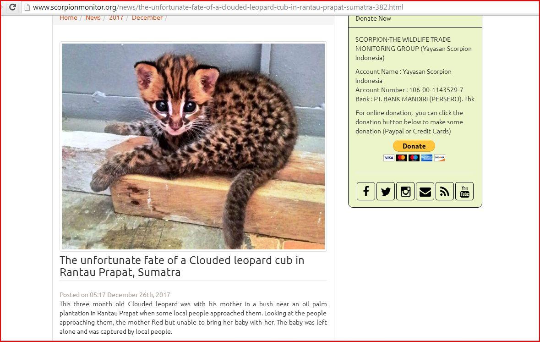 scorpion clouded leopard
