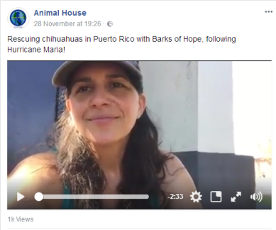 28 november rr in pr with barksof hope rescuing chis