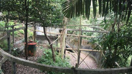location of 2 sun bears rr is meant to help