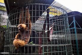 medan zoo primate