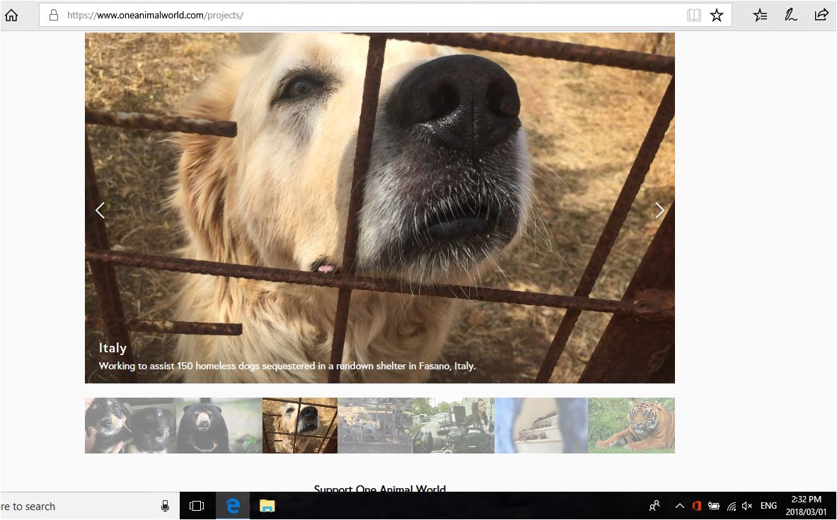 one animal world current projects dogs of fasano with date
