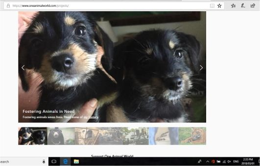 ONE ANIMAL WORLD FOSTER PUPS PROJECT WITH DATE