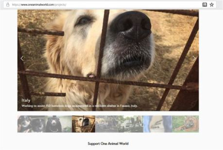 one-animal-world-projects-in-italy-claiming-she-is-working-to-assist-150-homesless-dogs