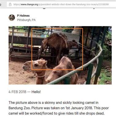poo zoo lie3.JPG