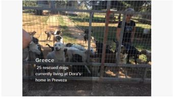 greece dog rescue