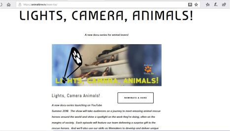 lights camera animals.JPG