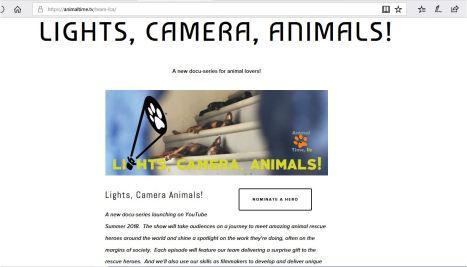 lights camera animals.JPG