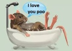 rat in bath
