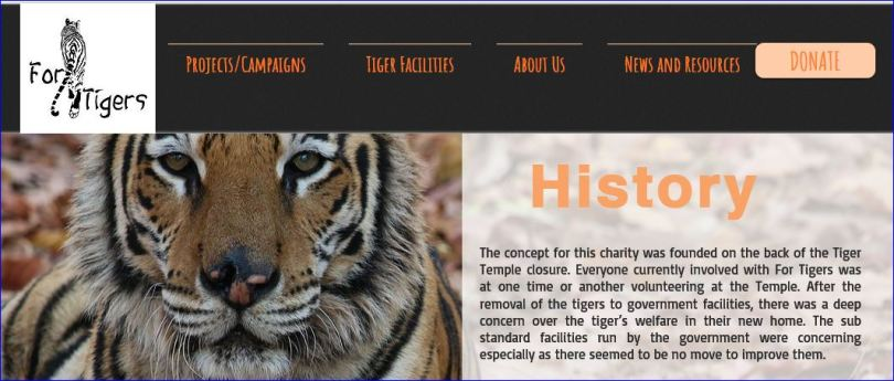 history of for tigers states its tiger temple volunteers