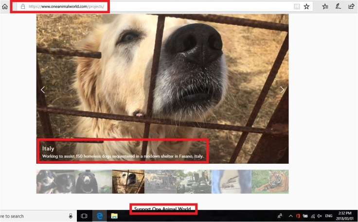 one animal world current projects dogs of fasano with date donate