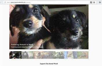 one animal world donate to help rr foster puppies