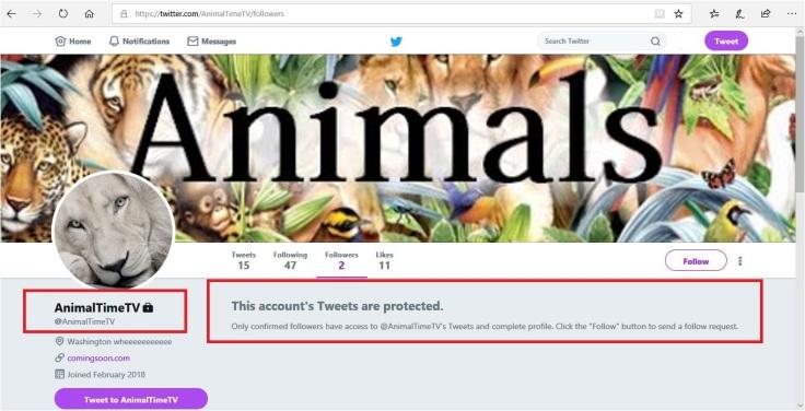 animaltimetv twitter account