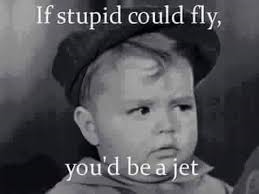 stupid could fly