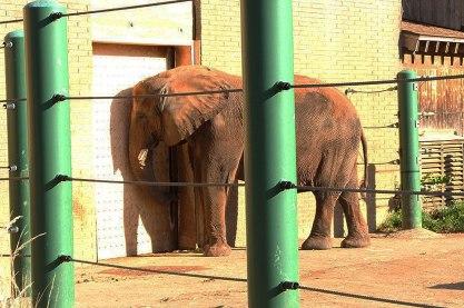 kentucky zoo
