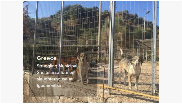 greece struggling pound on slaughterhouse