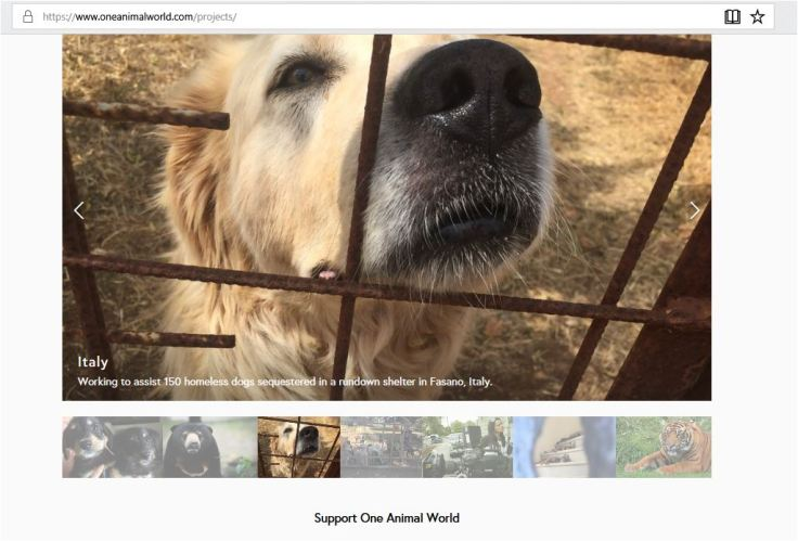 ONE ANIMAL WORLD PROJECTS IN ITALY CLAIMING SHE IS WORKING TO ASSIST 150 HOMESLESS DOGS