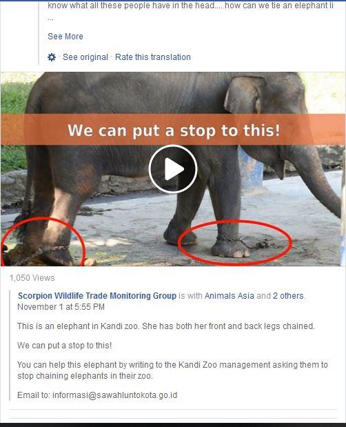kandi zoo scorpion wildlife trade monitoring group re elephants